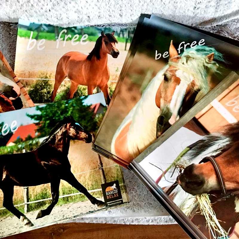 Plakat z ulubionym koniem