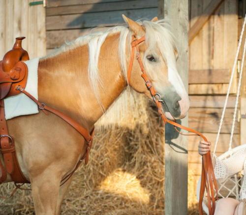 Ranczo Relax szkoła jazdy konnej  nasze konie