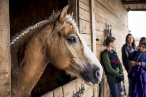 68ranczorelax-lescze-konie-zawody-jezdzieckie-2021